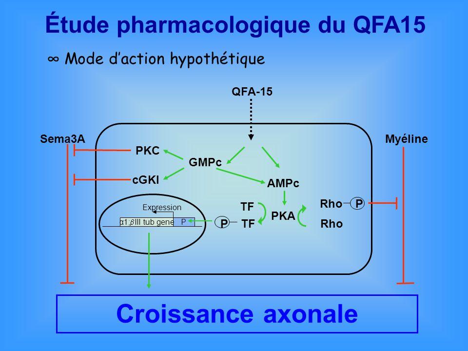 Croissance axonale Étude pharmacologique du QFA15