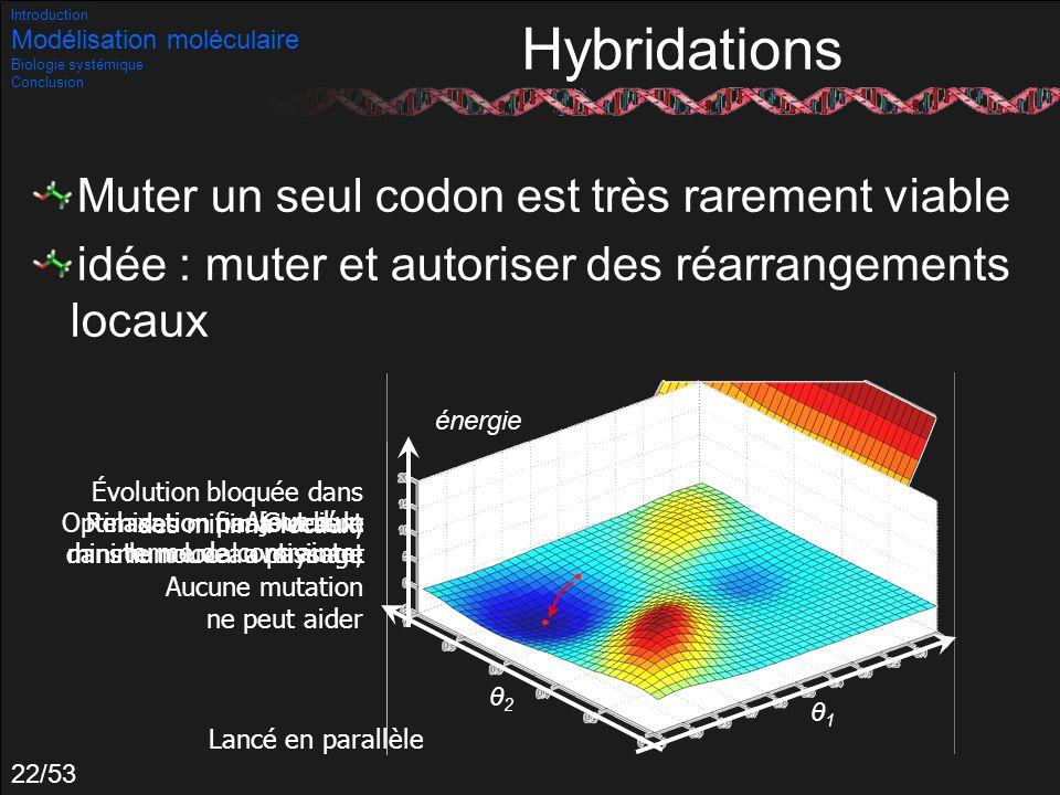 Hybridations Muter un seul codon est très rarement viable