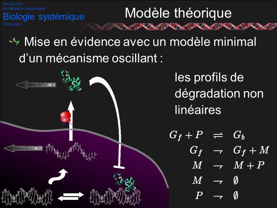 Introduction Modélisation moléculaire. Biologie systémique. Conclusion. Modèle théorique.