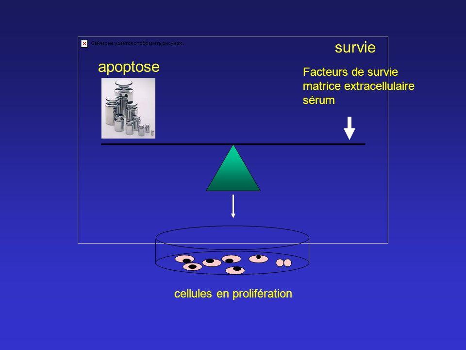 cellules en prolifération