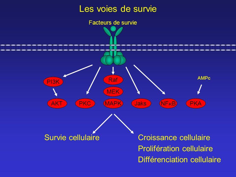 Les voies de survie Survie cellulaire Croissance cellulaire