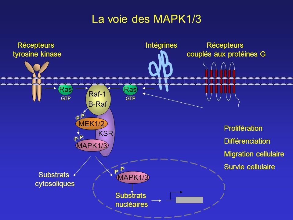 couplés aux protéines G