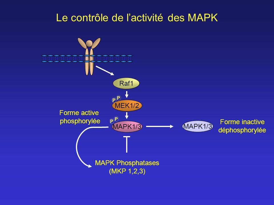 Le contrôle de l'activité des MAPK