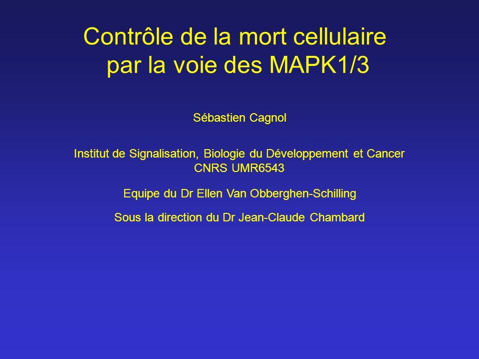 Contrôle de la mort cellulaire par la voie des MAPK1/3