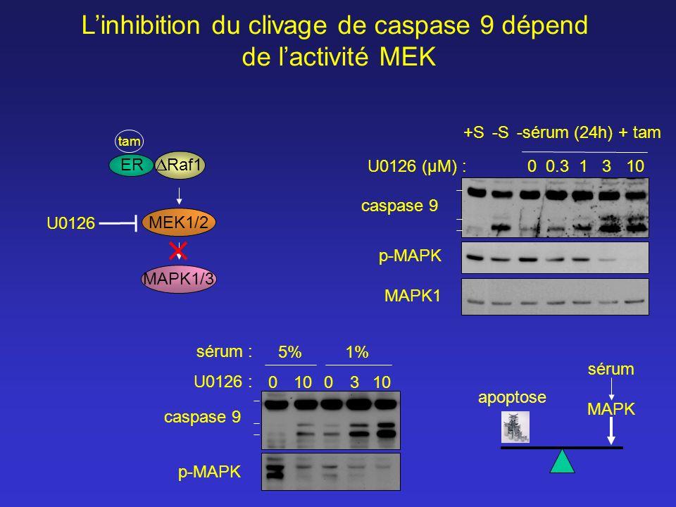 L'inhibition du clivage de caspase 9 dépend
