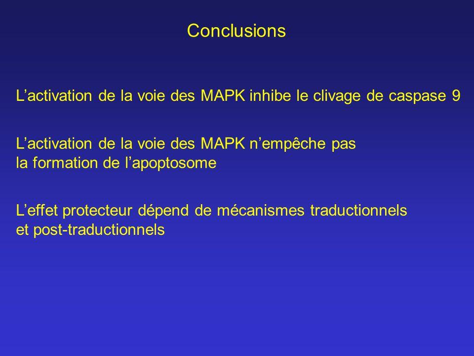 ConclusionsL'activation de la voie des MAPK inhibe le clivage de caspase 9. L'activation de la voie des MAPK n'empêche pas.