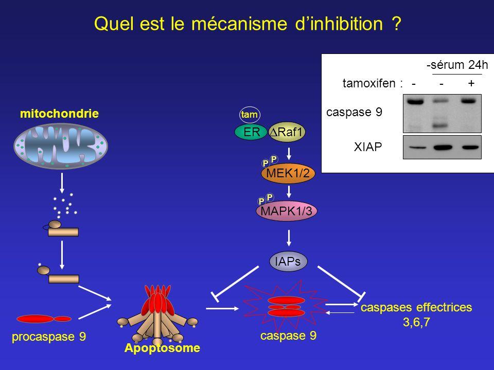 Quel est le mécanisme d'inhibition