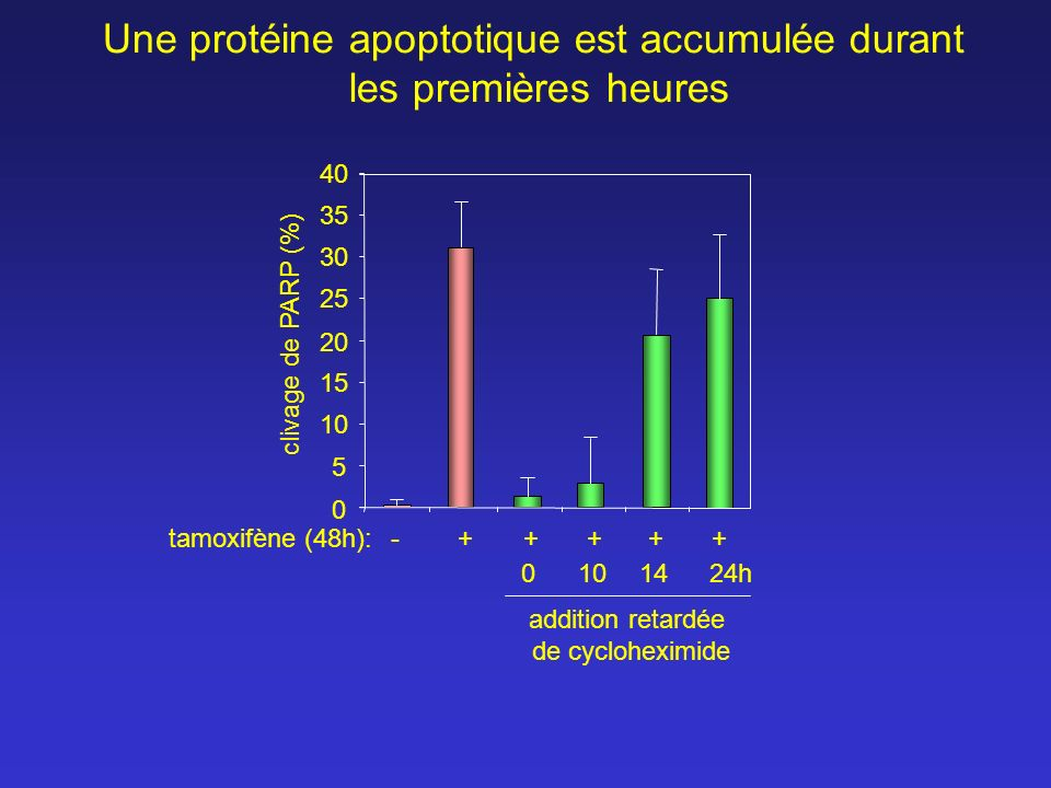 Une protéine apoptotique est accumulée durant