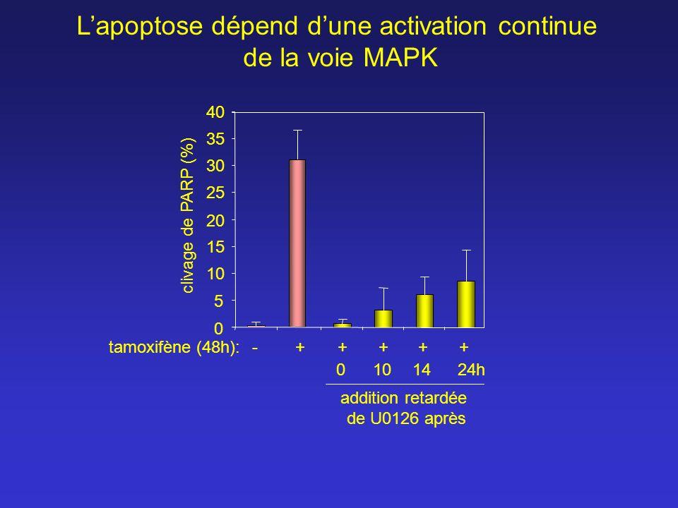 L'apoptose dépend d'une activation continue