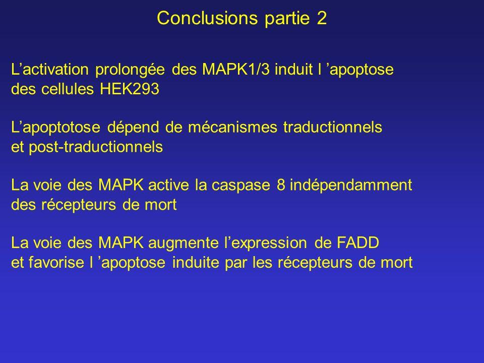 Conclusions partie 2 L'activation prolongée des MAPK1/3 induit l 'apoptose. des cellules HEK293. L'apoptotose dépend de mécanismes traductionnels.