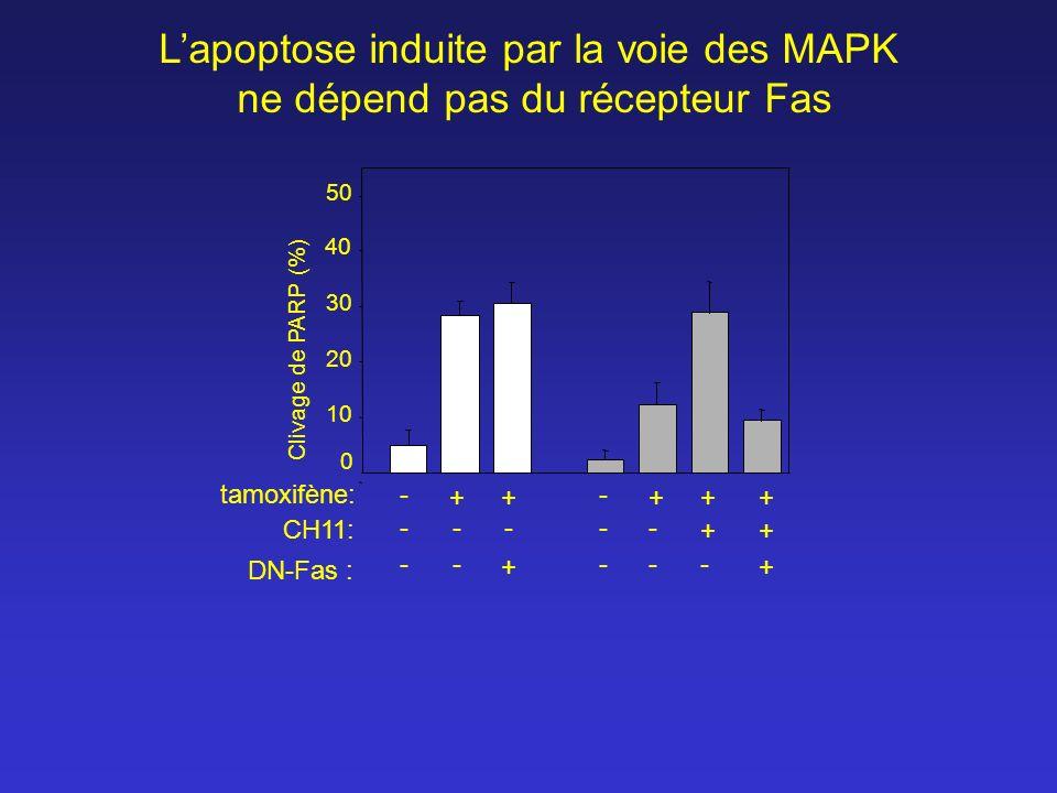 L'apoptose induite par la voie des MAPK ne dépend pas du récepteur Fas