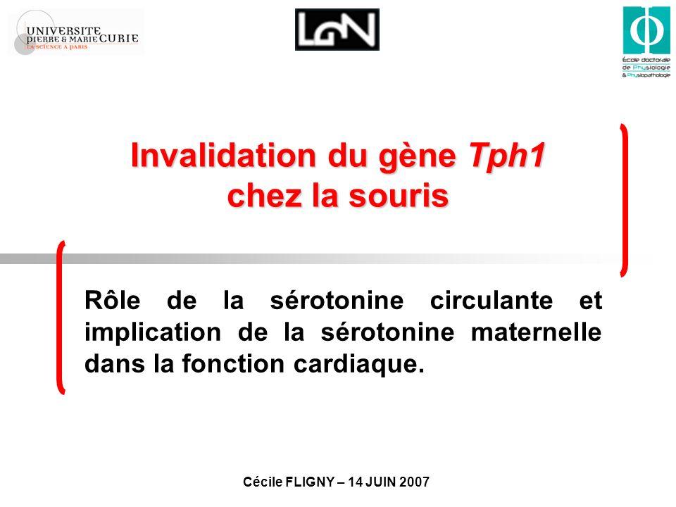 Invalidation du gène Tph1 chez la souris
