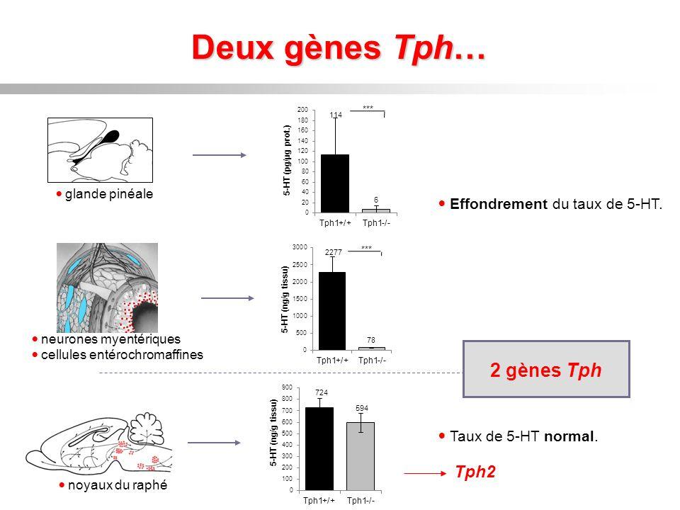 Deux gènes Tph… 2 gènes Tph Tph2 Effondrement du taux de 5-HT.
