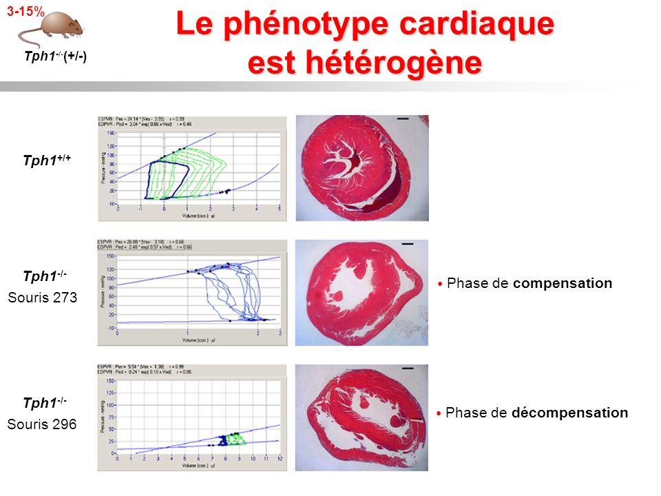 Le phénotype cardiaque est hétérogène