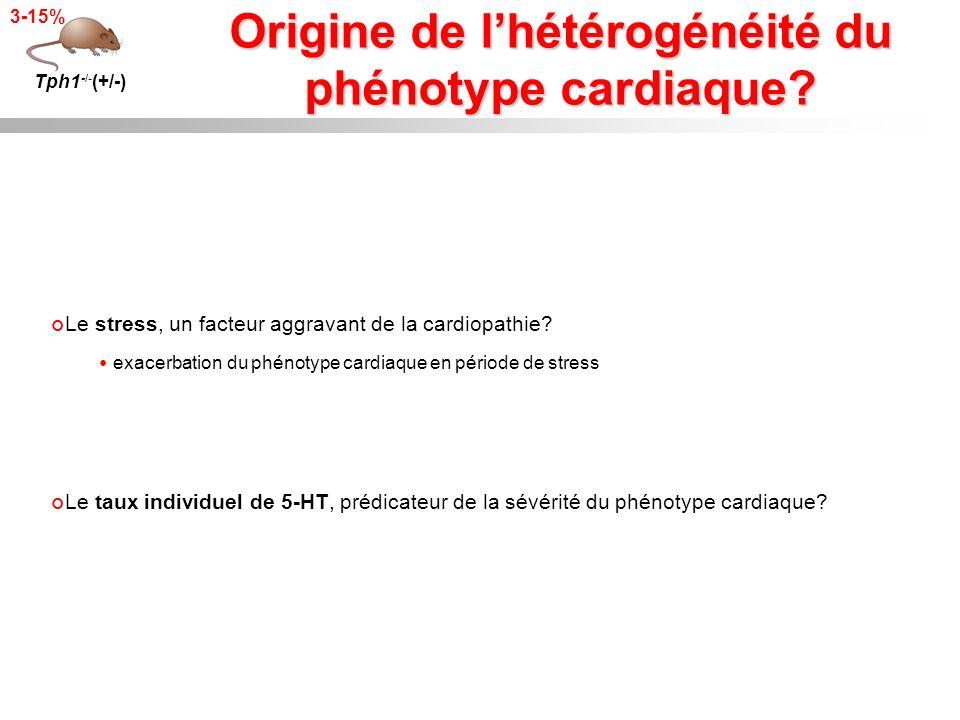 Origine de l'hétérogénéité du phénotype cardiaque