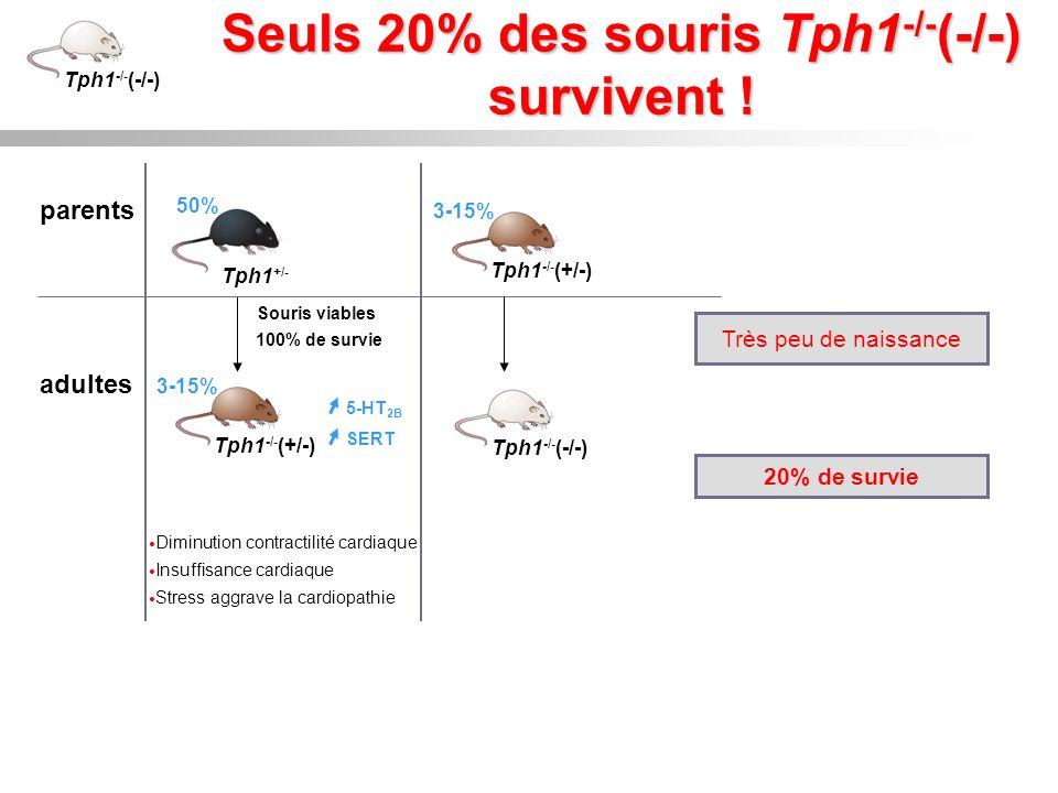 Seuls 20% des souris Tph1-/-(-/-) survivent !