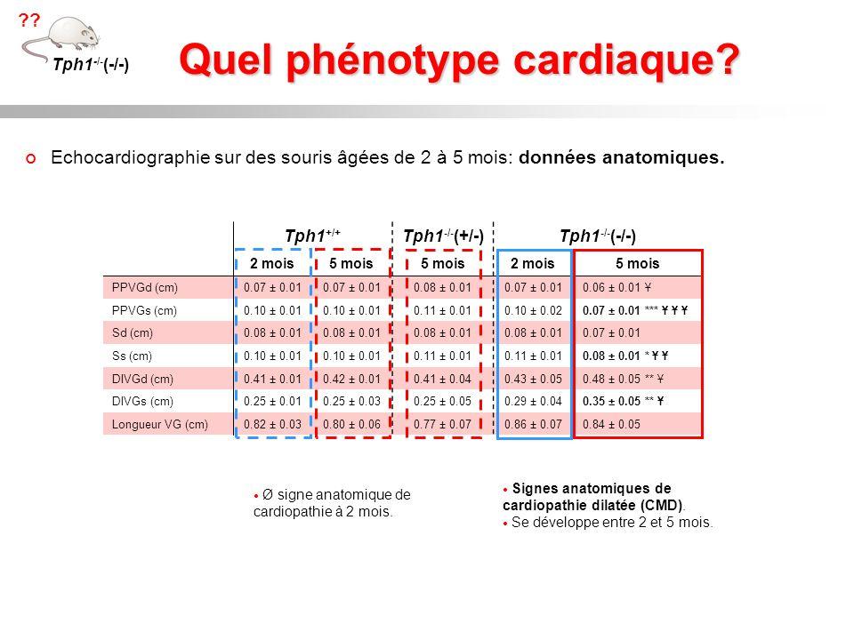 Quel phénotype cardiaque