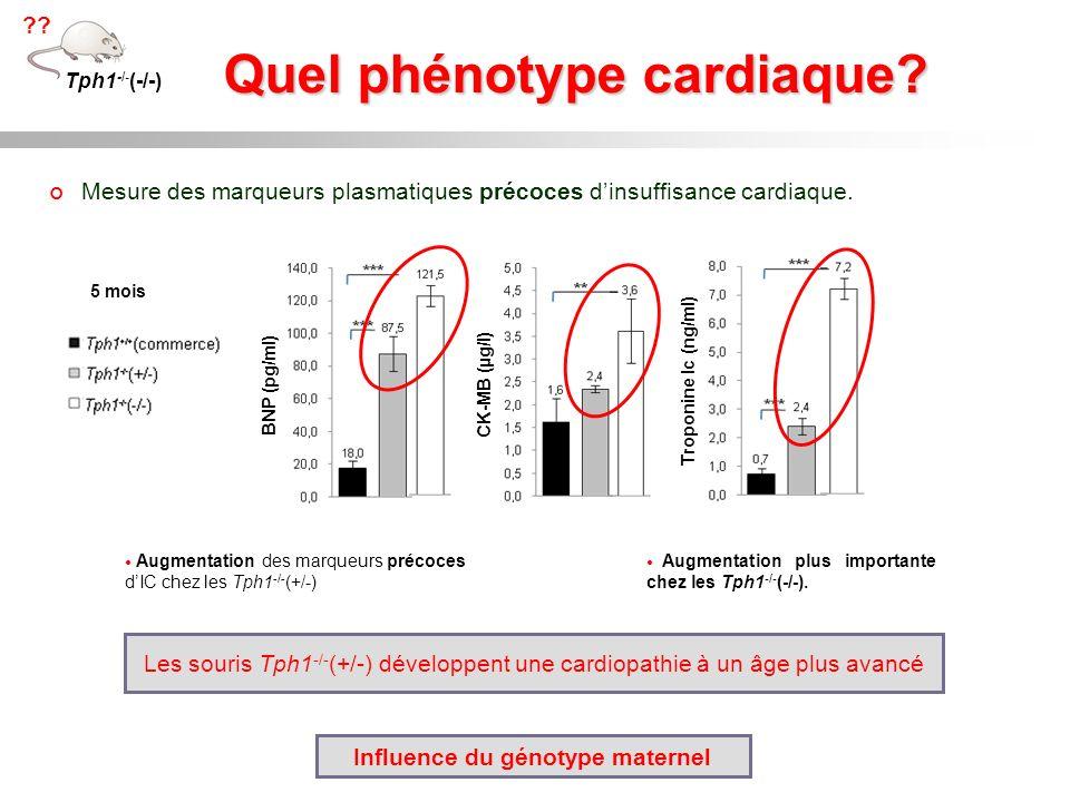 Quel phénotype cardiaque Influence du génotype maternel