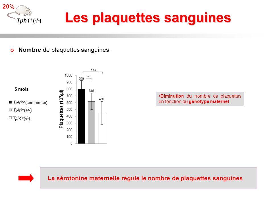 Les plaquettes sanguines