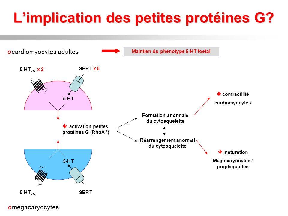 L'implication des petites protéines G