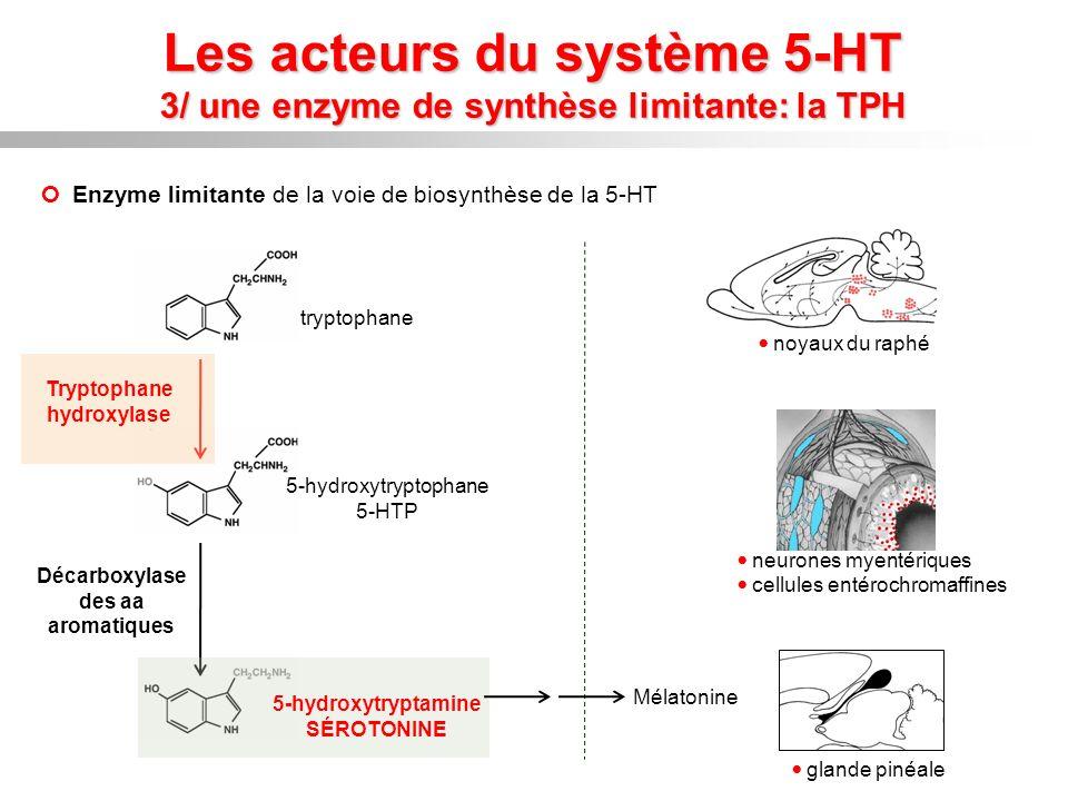 Tryptophane hydroxylase