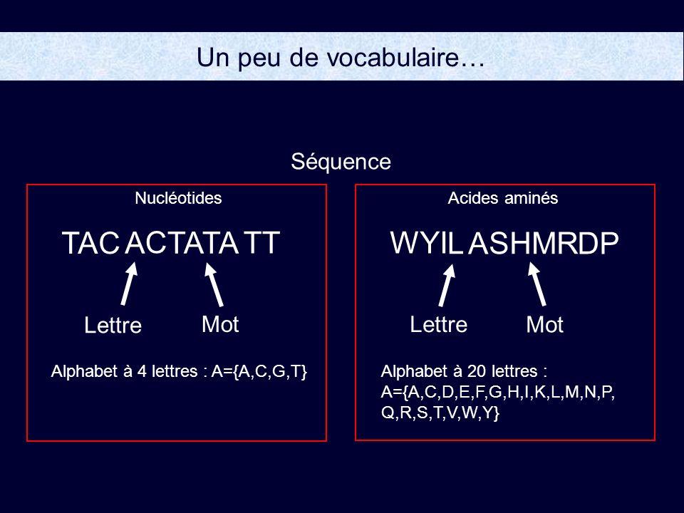 TAC A C TATA TT WYI L A SHMR DP Un peu de vocabulaire… Séquence Lettre