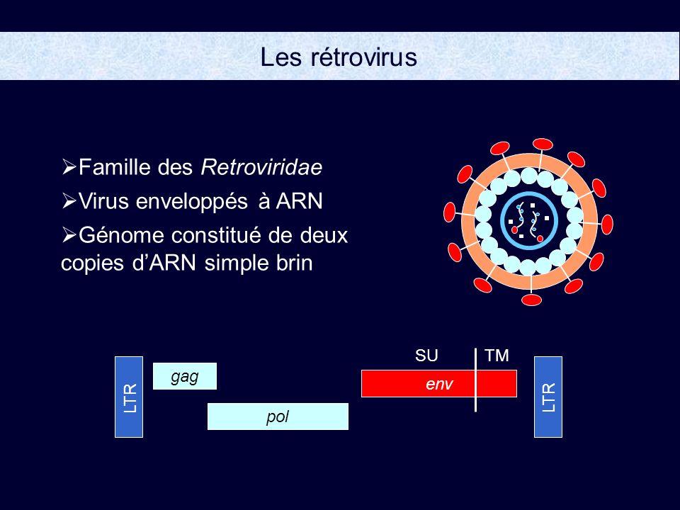 Les rétrovirus Famille des Retroviridae Virus enveloppés à ARN