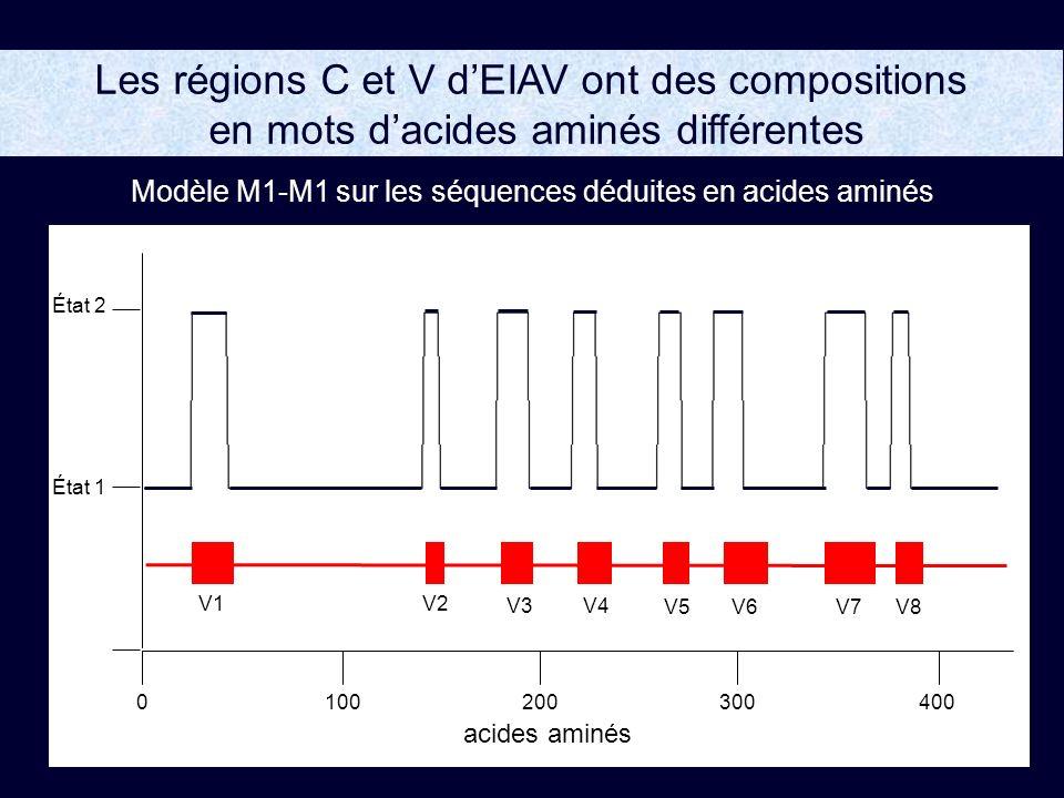 Modèle M1-M1 sur les séquences déduites en acides aminés