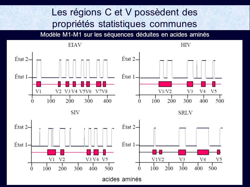 Les régions C et V possèdent des propriétés statistiques communes