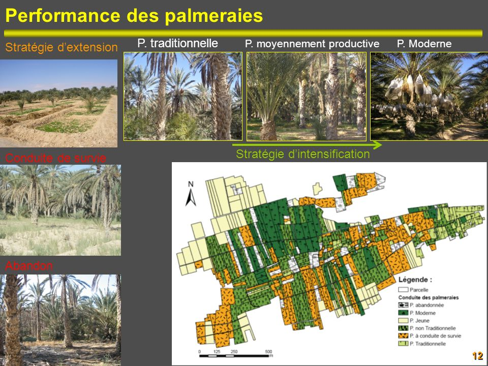Performance des palmeraies