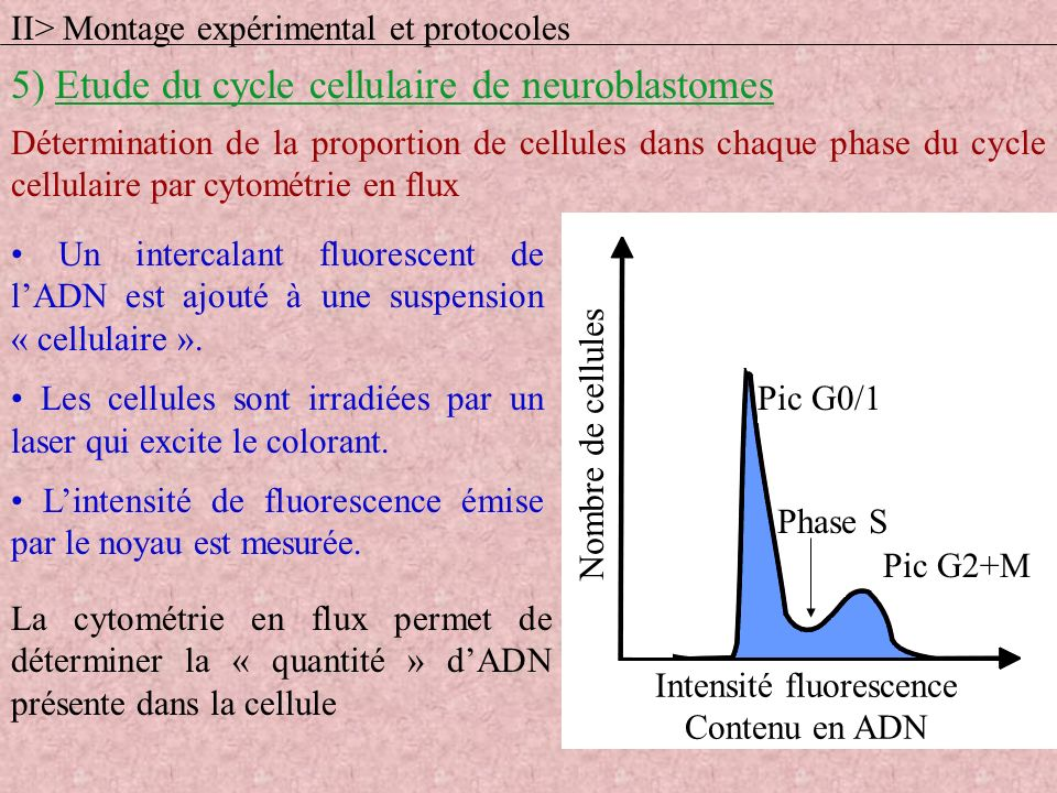 Intensité fluorescence