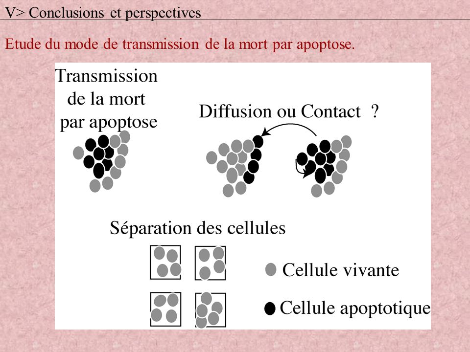 V> Conclusions et perspectives