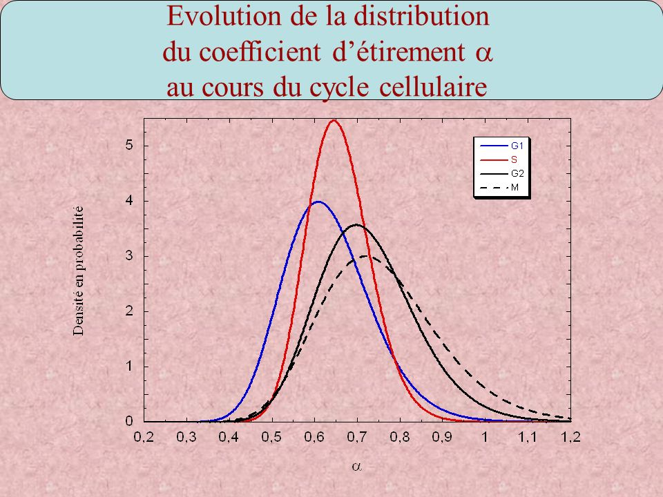 Evolution de la distribution du coefficient d'étirement a