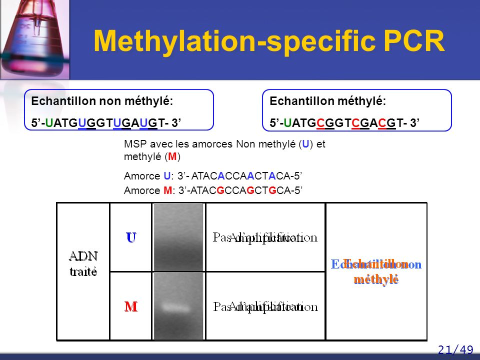 Methylation-specific PCR