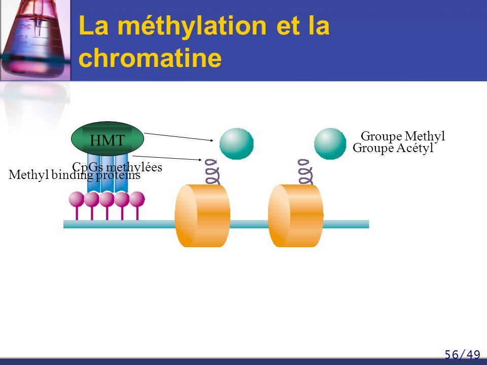 La méthylation et la chromatine