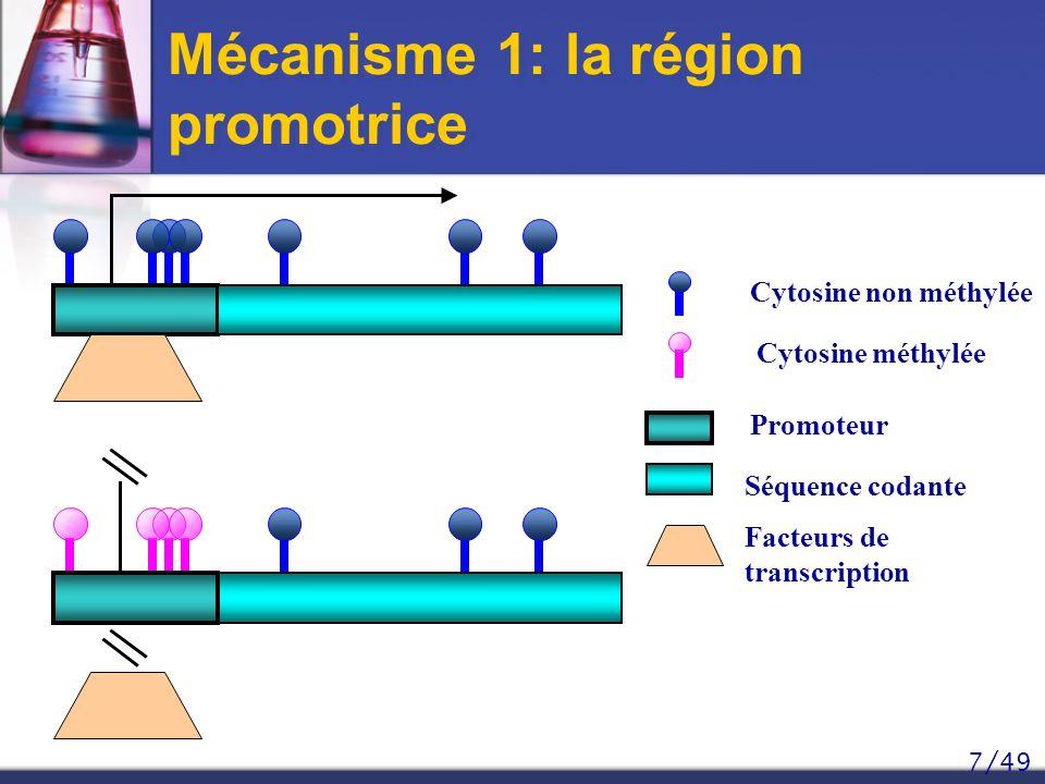 Mécanisme 1: la région promotrice
