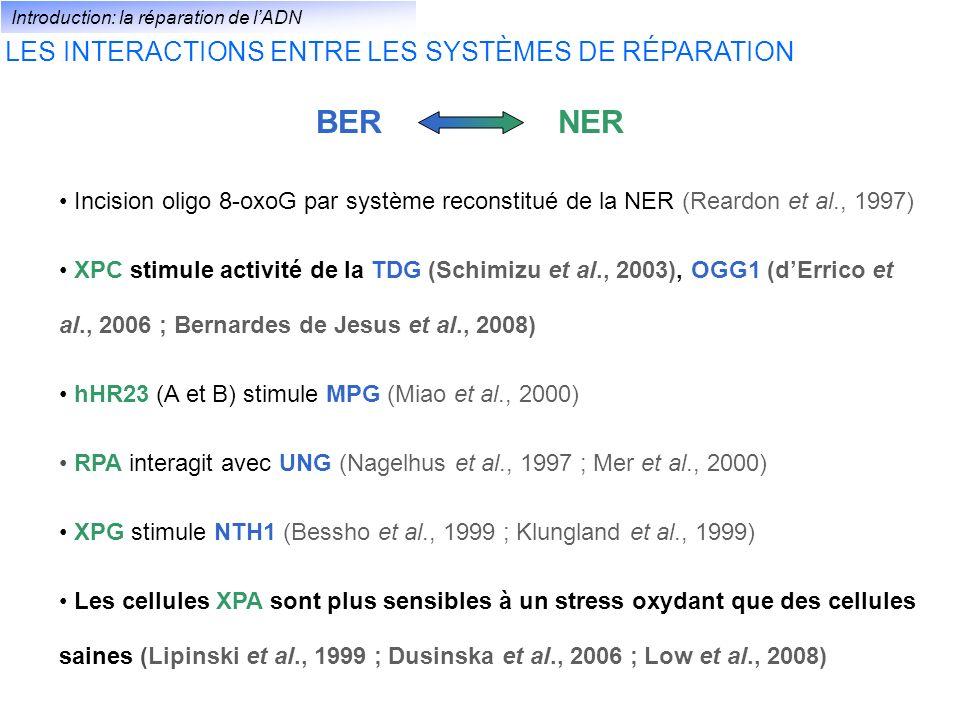 BER NER LES INTERACTIONS ENTRE LES SYSTÈMES DE RÉPARATION