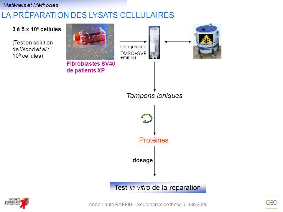 LA PRÉPARATION DES LYSATS CELLULAIRES