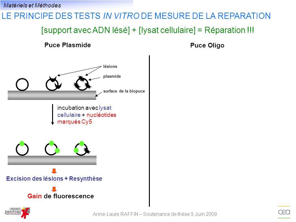 Excision des lésions + Resynthèse
