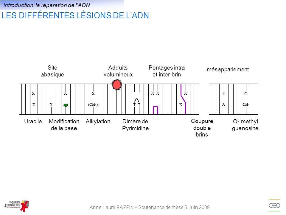 LES DIFFÉRENTES LÉSIONS DE L'ADN