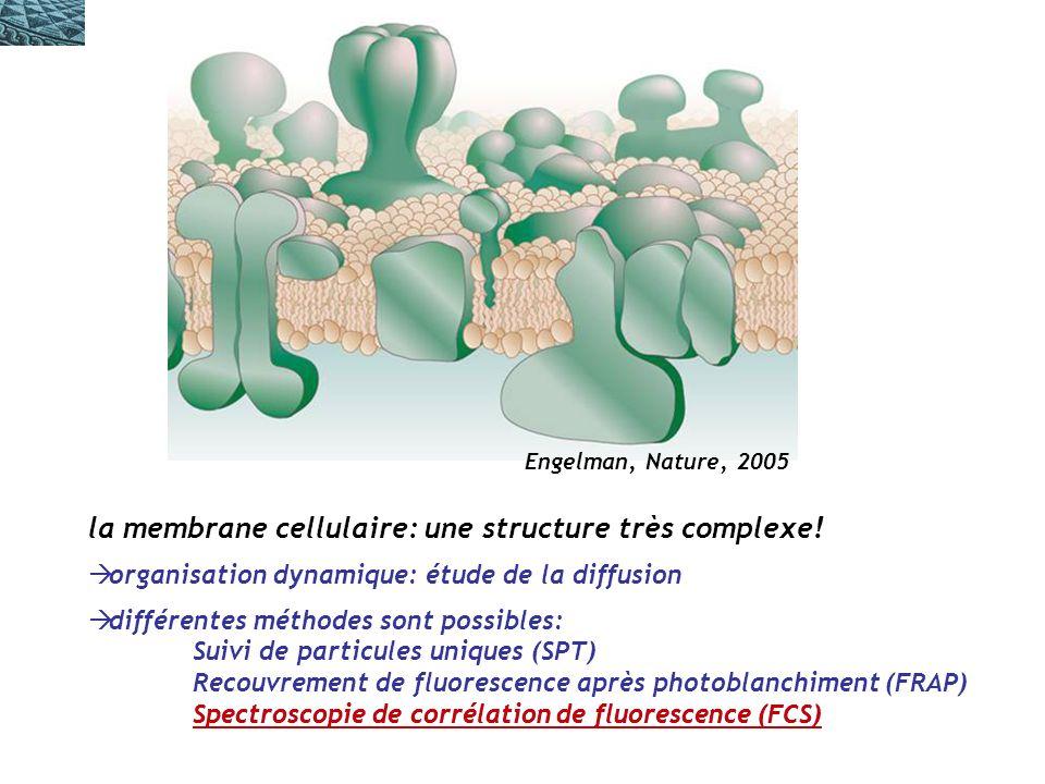 la membrane cellulaire: une structure très complexe!