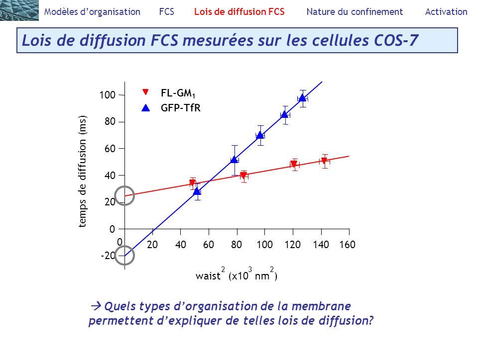 Lois de diffusion FCS mesurées sur les cellules COS-7