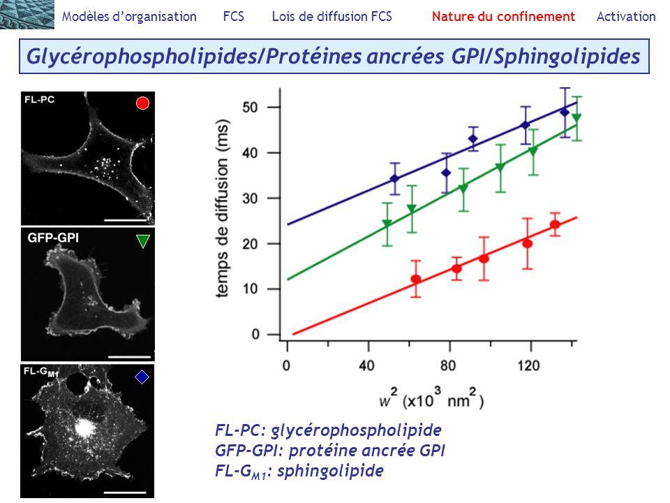 Glycérophospholipides/Protéines ancrées GPI/Sphingolipides