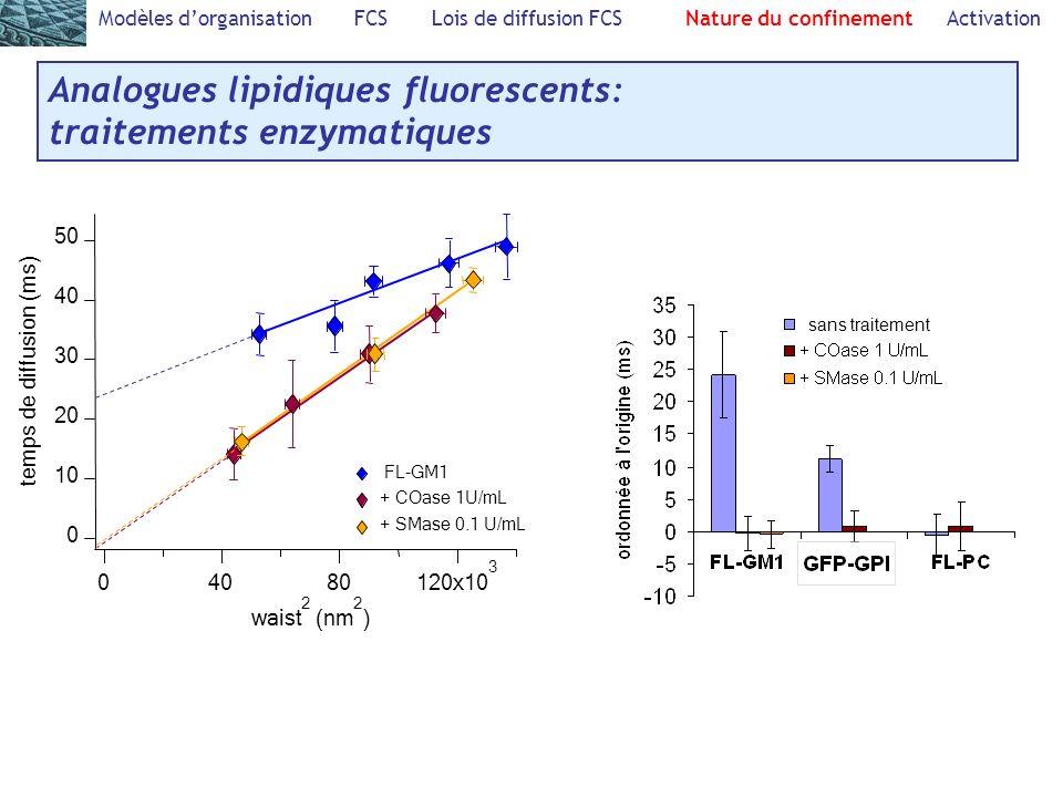 Analogues lipidiques fluorescents: traitements enzymatiques