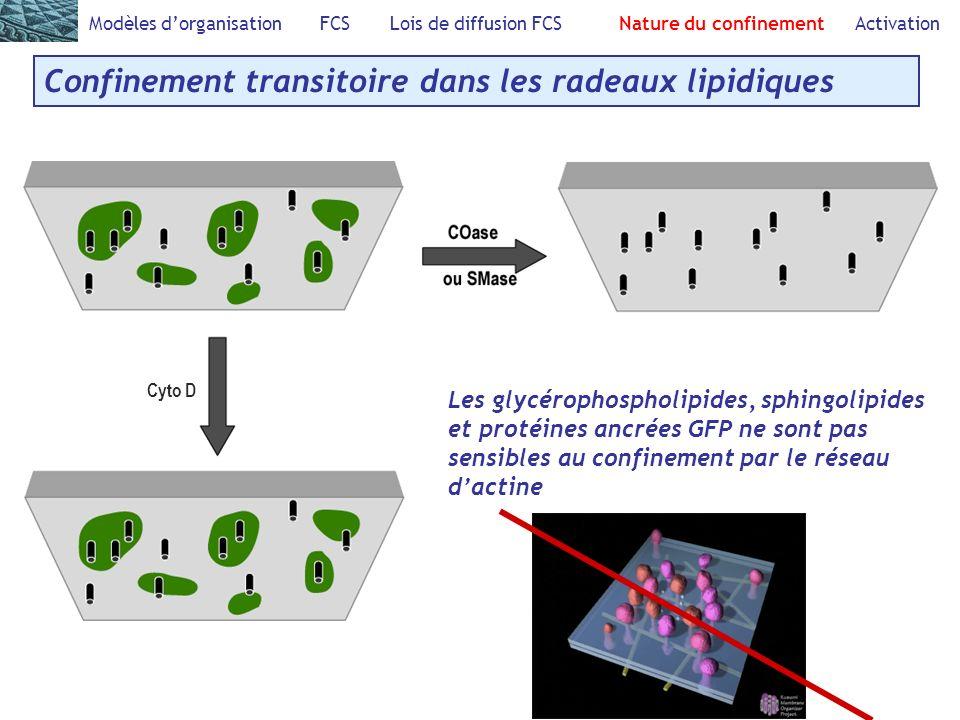 Confinement transitoire dans les radeaux lipidiques