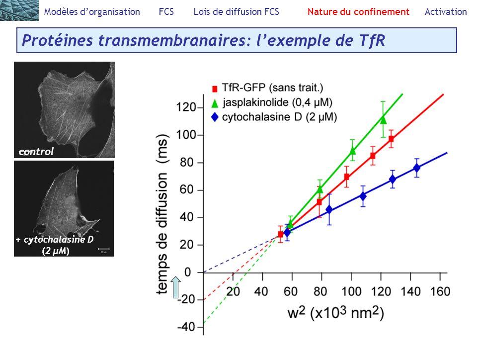 Protéines transmembranaires: l'exemple de TfR