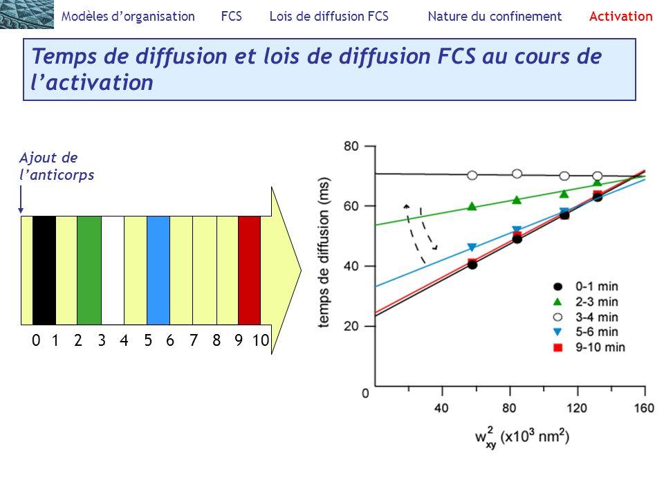 Temps de diffusion et lois de diffusion FCS au cours de l'activation