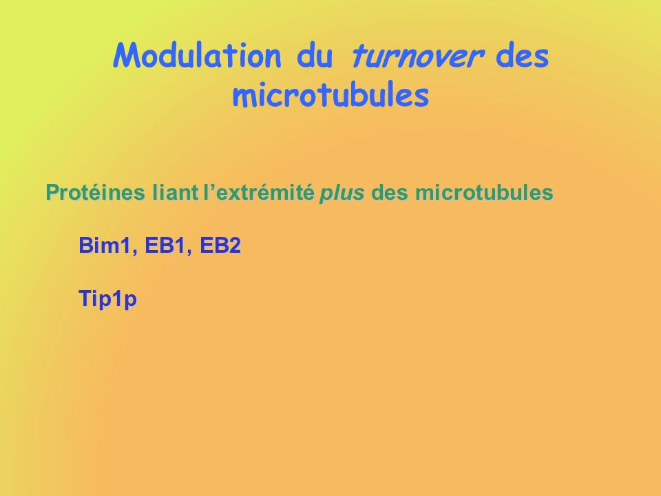 Modulation du turnover des microtubules