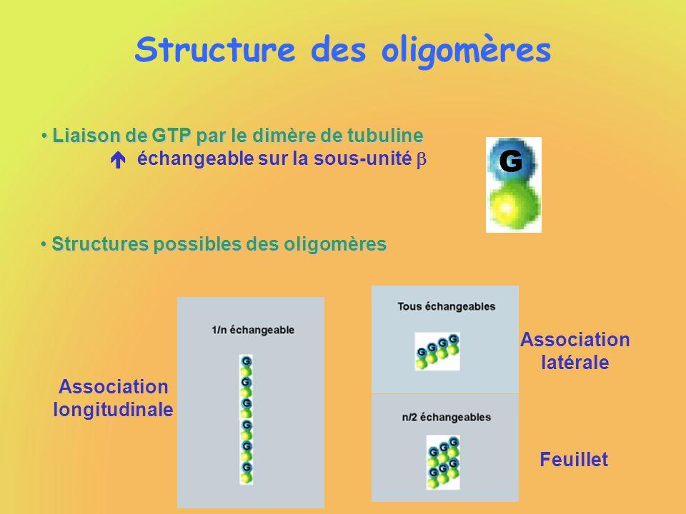 Structure des oligomères