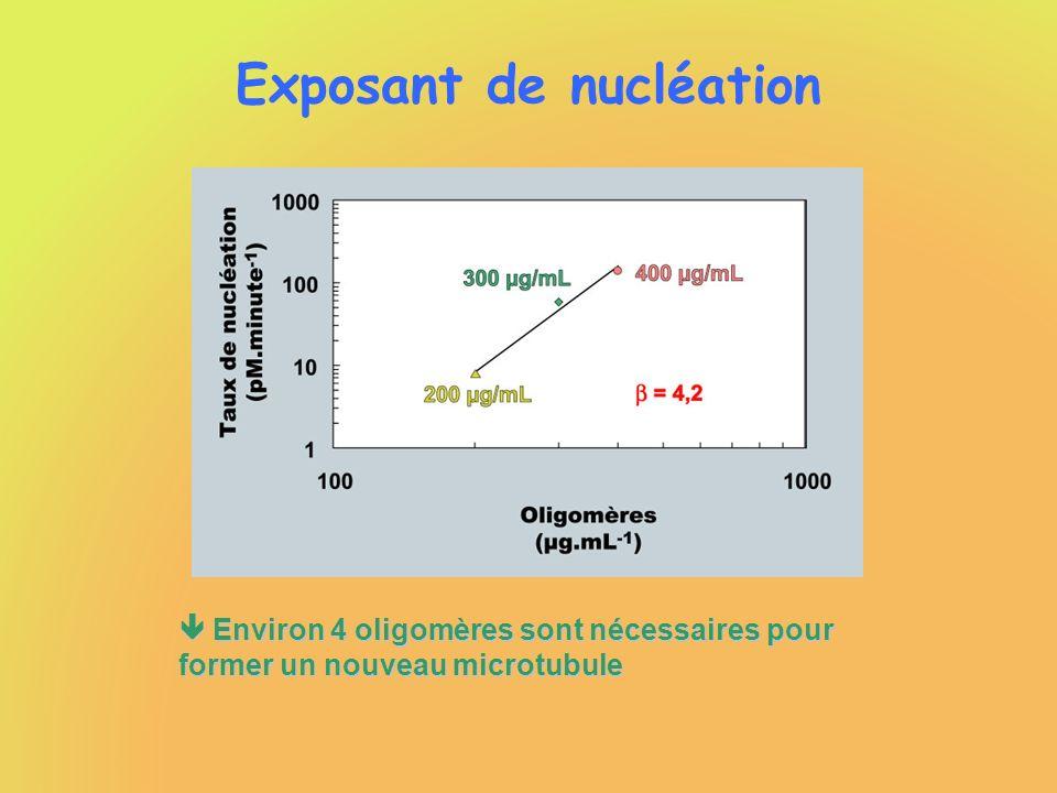 Exposant de nucléation